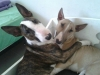 Dodge e la sorella Kira