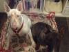 Ralph oggi con sua sorella Yuma