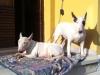 Zeus adottato con la sorella Ruby