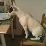 Pepita cane perfetto se si tratta di mangiare!!